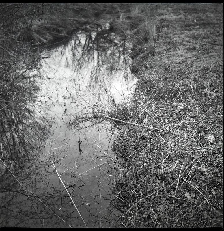 small stream, reflections, winter landscape, Biltmore Estate, Asheville, NC, Yashica D, Fomapan 400, Moersch Eco developer, 2.28.21