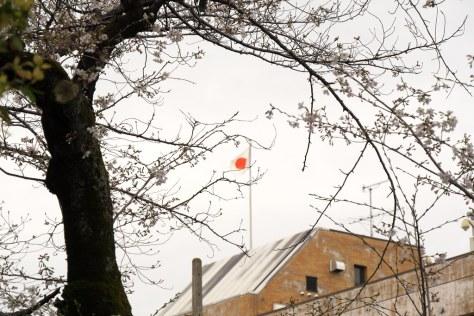 桜と日の丸
