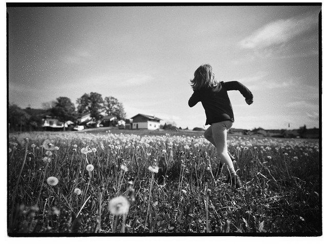 Dandelion Run