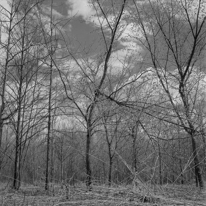 Spring, Grays Landing 1
