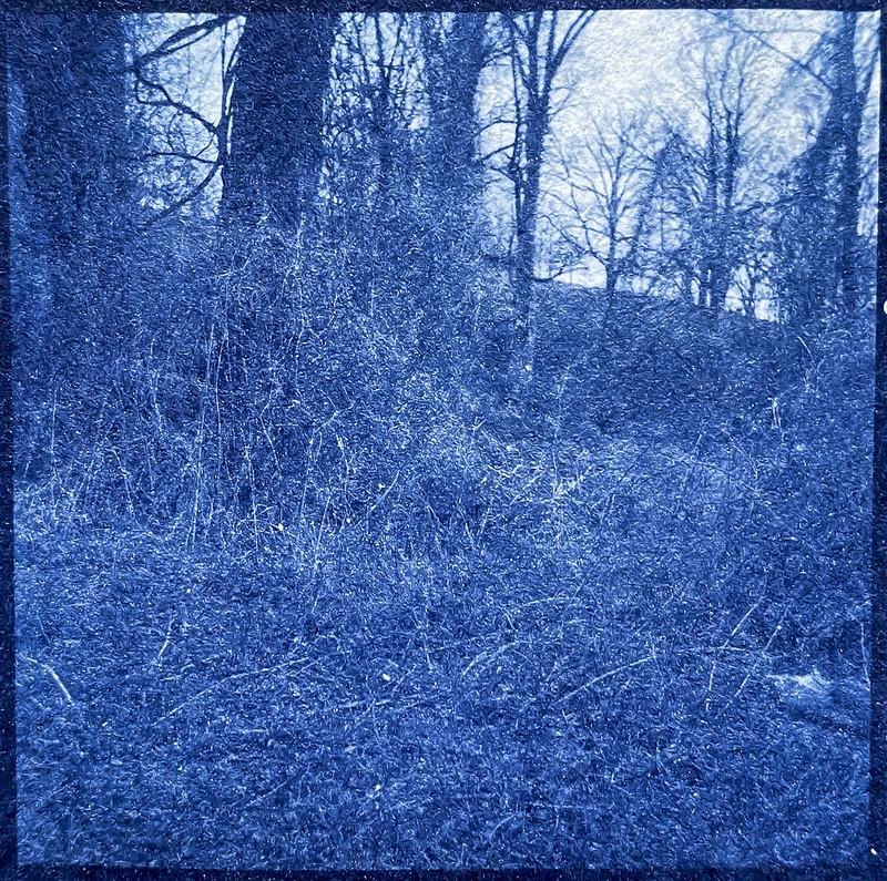 forest's edge, hillside, Biltmore Estate, Asheville, NC, cyanotype, natural fiber hot press paper, 6x6 medium format negative, Yashica D, Foma 400, March 2020, printed 4.18.21