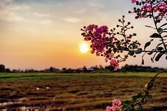 Hoa dại ven đường