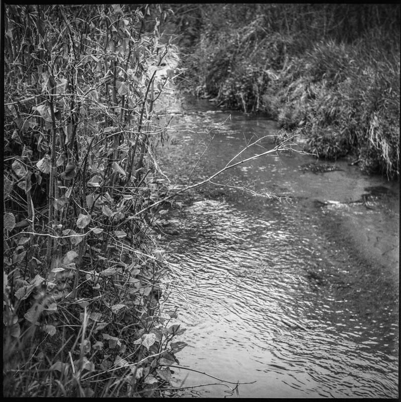 small stream III, spring landscape, buffer land behind Sam's, Asheville, NC, Ricohflex Dia M, Fomapan 200, Ilfosol 3 developer, 4.24.21