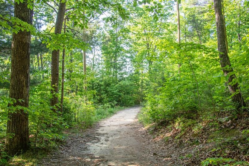 Benton Falls Trail16