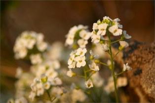 Берег озера Банное, весна, утро.  + Marumi DHG Achromat Macro 330 (+3)