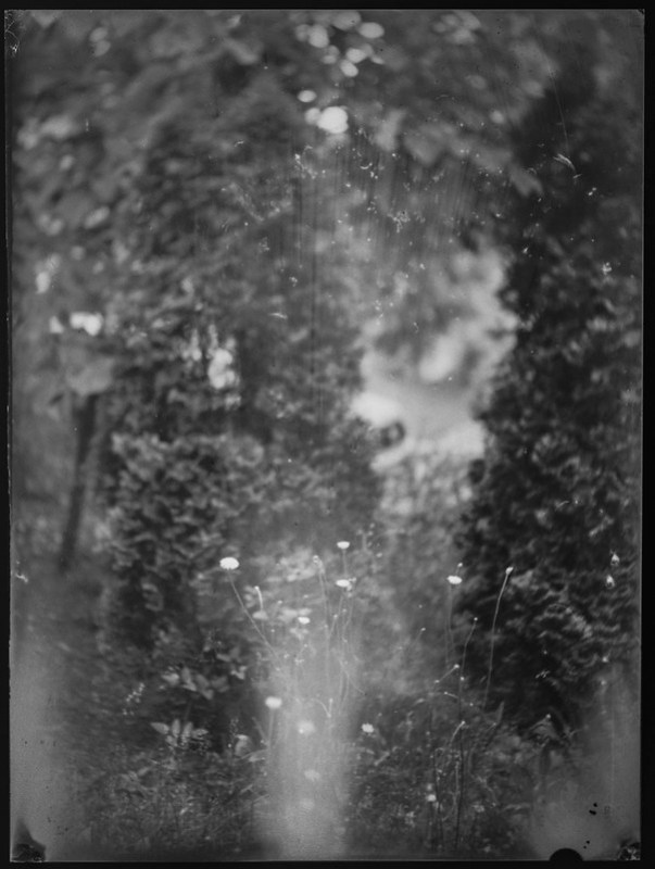 wildflowers, conifers, yard, Asheville, NC, Fotokor 1, VOOMP Anastigmat Ortagoz 135mm f-4.5, Fomapan 100, Ilfosol 3 developer, swirly bokeh, 5.28.21