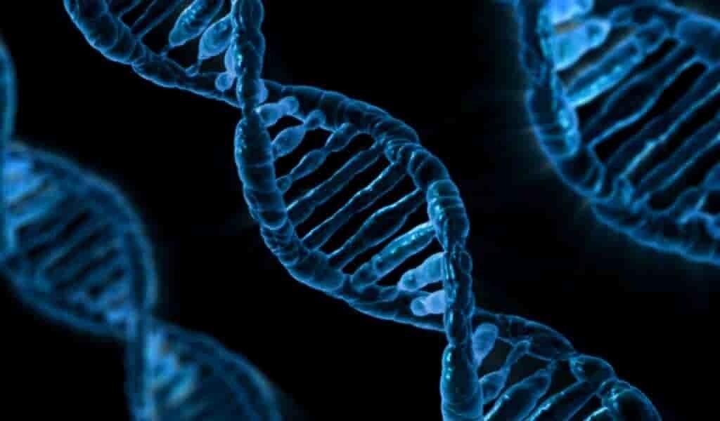 le-génome-humain-a-été-entièrement-séquencé-après-20-ans