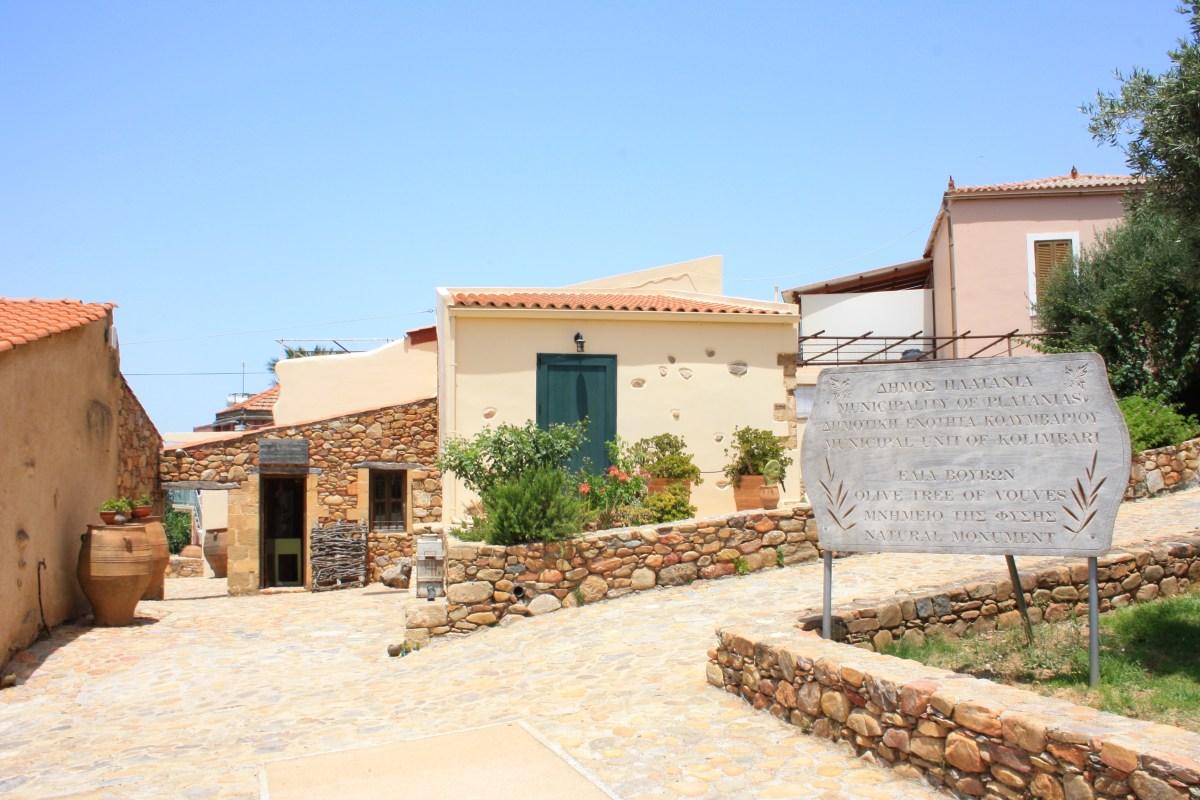 Maailman vanhin oliivipuu Vouvesissa
