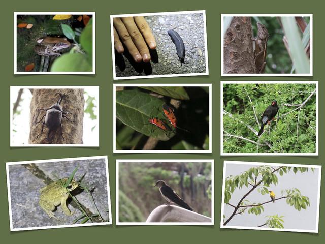 防疫在家,我們看到的二十種生物