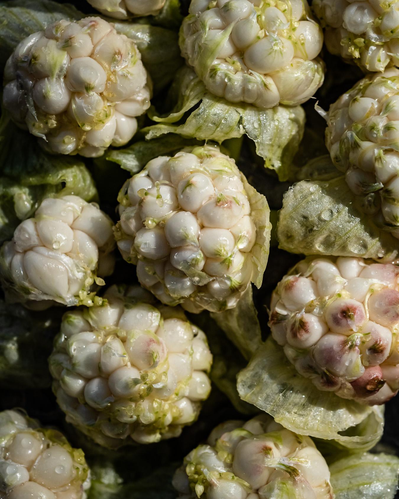 garlic bulbil recipe