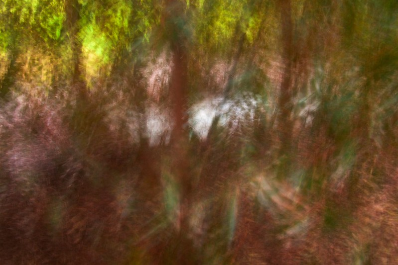 Abstraction of urban forest Parsons reserve 2021-07-23 14:49:40
