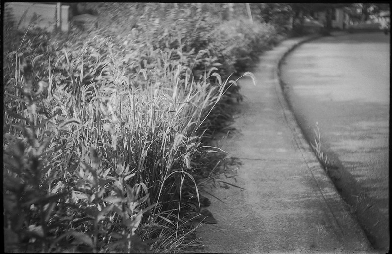 weeds and grasses, curbside, shallow depth of field, Druid Avenue, Asheville, NC, Exa Ihagee, Meritar 50mm f-2.9, Arista.Edu 200, HC-110 developer, 7.30.21