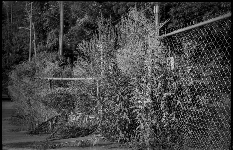 border fence, abandoned parking lot, wild vegetation, Druid Avenue, Asheville, NC, Exa Ihagee, Meritar 50mm f-2.9, Arista.Edu 200, HC-110 developer, 7.30.21