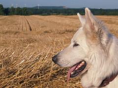 Erntezeit - Harvest time