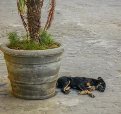 Life's so tiring - Havana