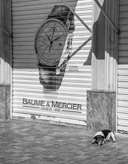 Time for a nap - Narbonne