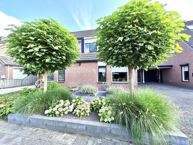 Voortuin landelijke stijl 2-onder-1-kap- woning met 2 bolbomen en siergras