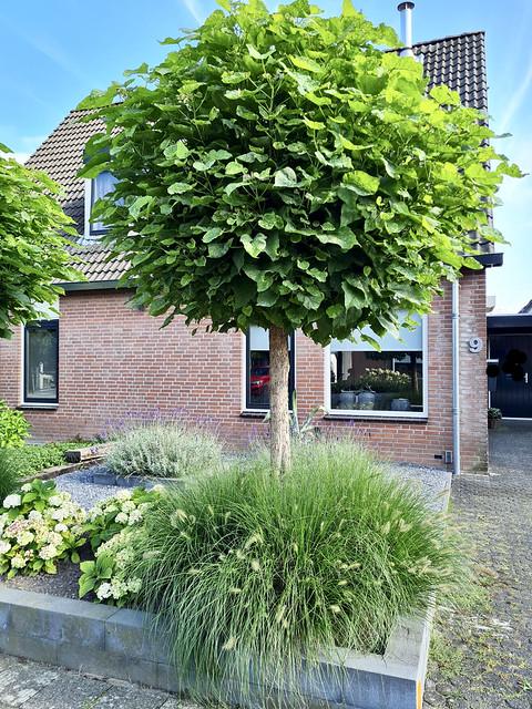 Voortuin landelijke stijl 2-onder-1-kap- woning met boompjes en siergras