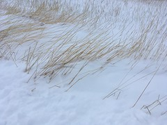November 29, 2019 / Grass in Snow at Work