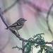 The Rare Bird Stands Still