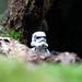 Vigie Stormtrooper