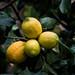 lemons  ...