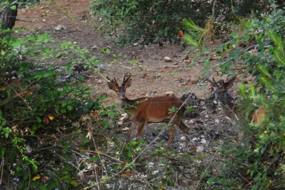 Jaen ciervos Sierra de Cazorla Parque Cinegetico Collado del Almendral 03