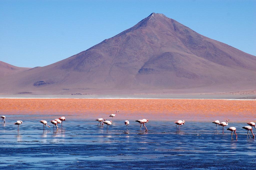 Laguna Colorada Bolivia Chilean Flamingos Feeding Lagun Flickr