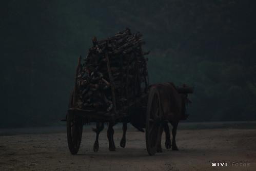 Bull cart!! pull cart!! | Anuradhapura. SriLanka | Flickr
