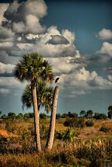 Heron on Palm Redynamix