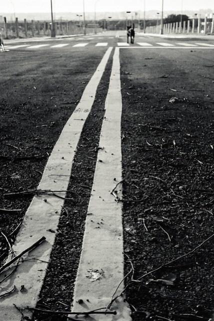 犬之道, Dog's Way