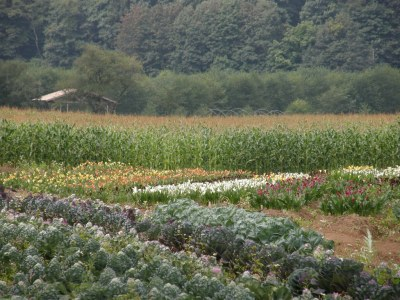 Certified Sustainable Flower Farm
