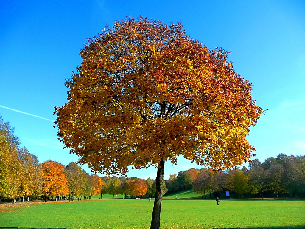 3d Live Wallpaper In Hd Colorful Maple Tree Feel Free To Use The Image In