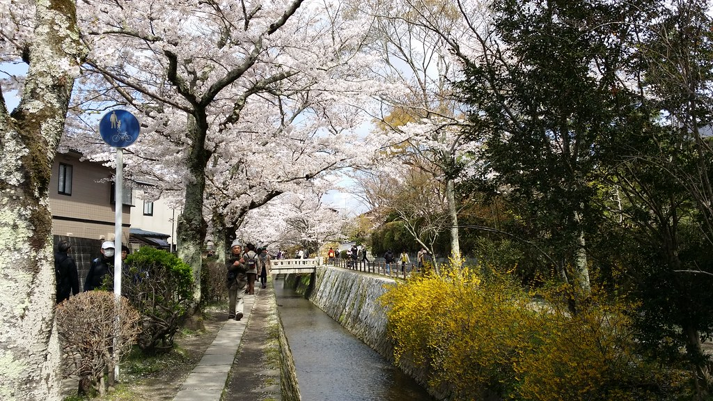2014京都賞櫻 | Zoe715 | Flickr