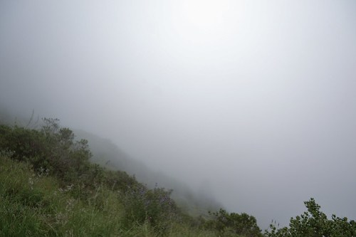 Foggy coastline in Mendocino County