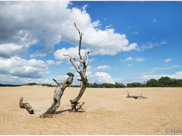 dead tree (HP012315)