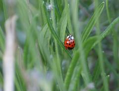 Lord Best Grass