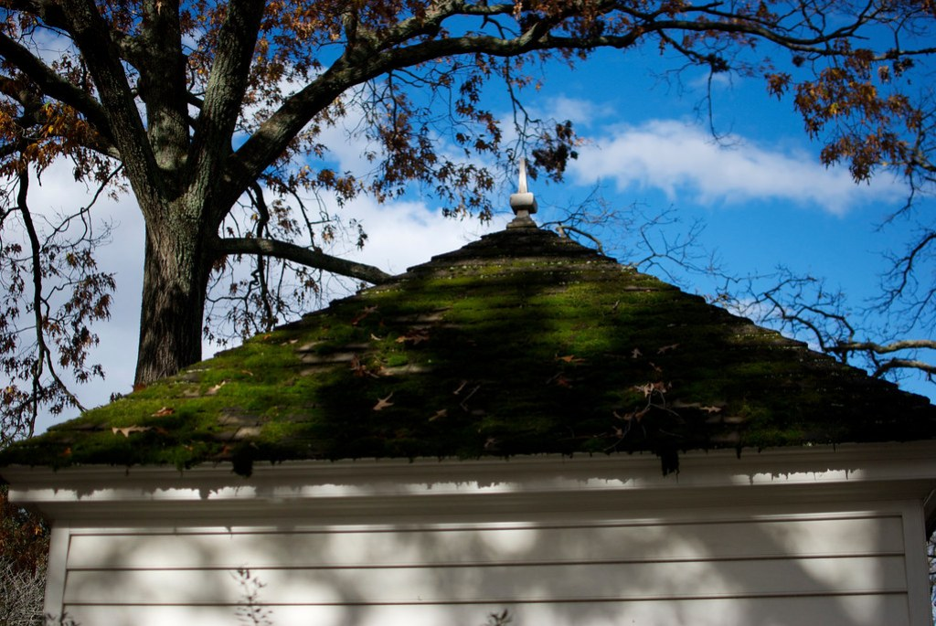 Mossy Roof in Williamsburg