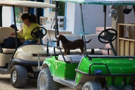 Holbox Golfcarts