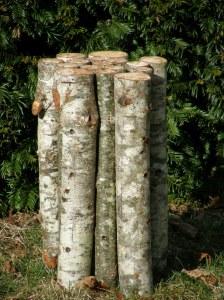 Birch Bench