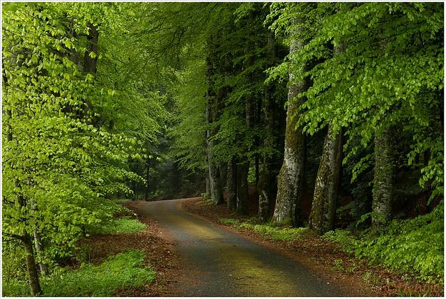 het groene pad (HP011279)
