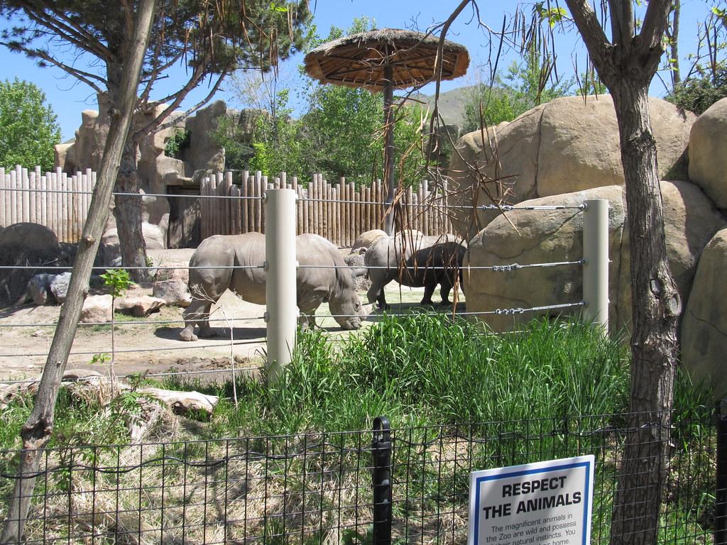 Rhinos Hogle Zoo Salt Lake City Utah Rhinoceros
