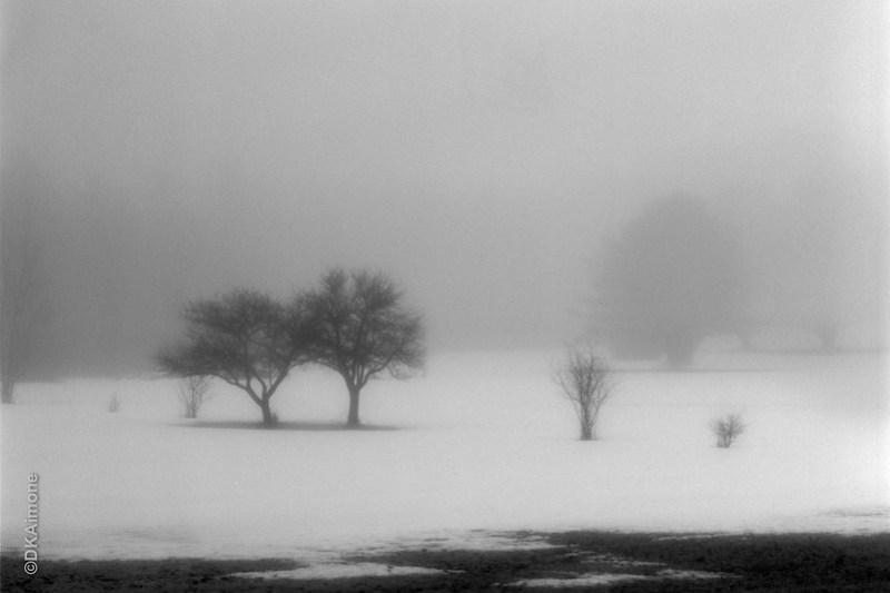 Two Trees In Fog