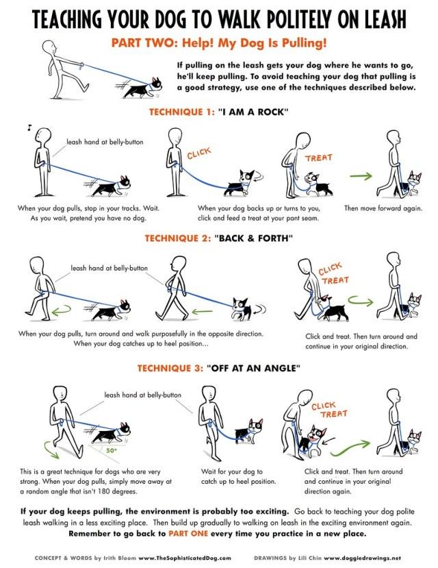 How to Teach A Dog to Walk on a Leash