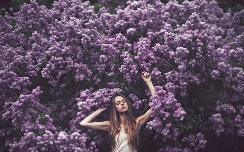 sea of lilac
