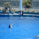 Oceanografic Miguel, delfines 02