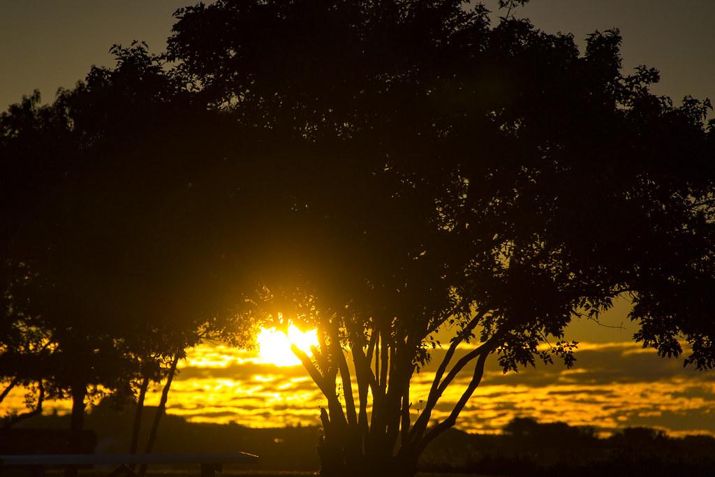 sunrise through the trees