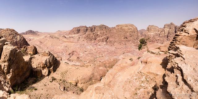 An old pine above Wadi Farasa