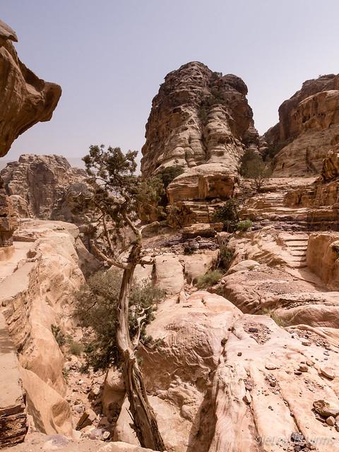 Trail to the Monastery Ed Deir