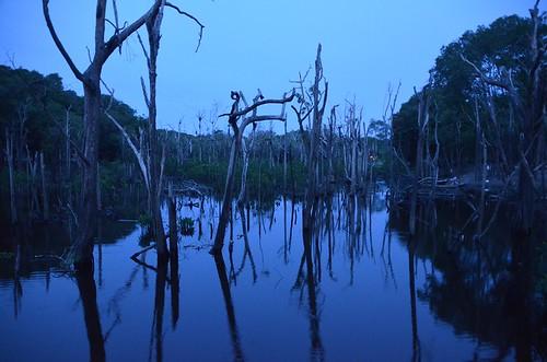 Anoitecer na Amazônia / Nightfall at Amazon